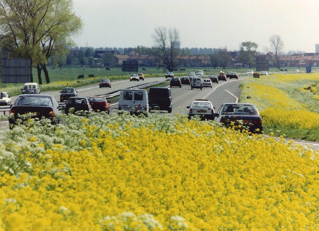 De bermen langs de snelweg in bloei
