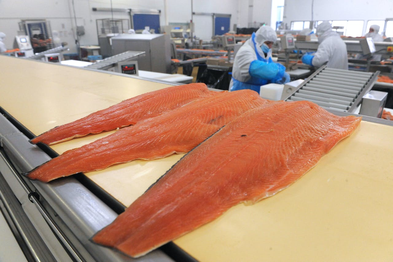 """Pieces of smoked-salmon are pictured at a plant of Bretagne Saumon, a subsidiary of food-processing group """"Guyader Gastronomie"""", on April 4, 2014 in Châteauneuf-du-Faou, western of France. AFP PHOTO FRED TANNEAU (Photo by FRED TANNEAU / AFP)"""