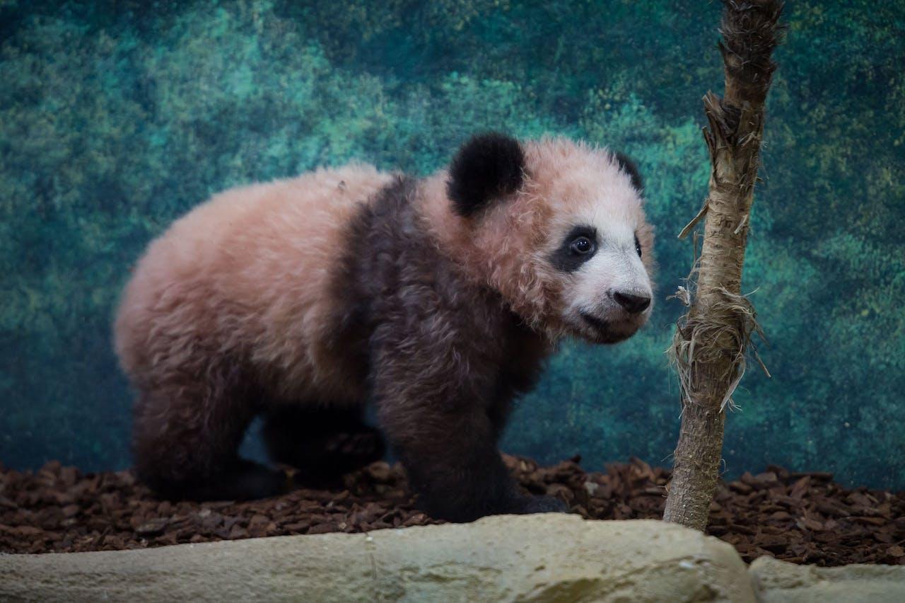 Na het zien van positief stemmende beelden, zoals die van een puppy of een panda, stonden de deelnemers aan het onderzoek meer open voor een onbekende frisdrank. Ze dronken er meer van en vonden het lekkerder.