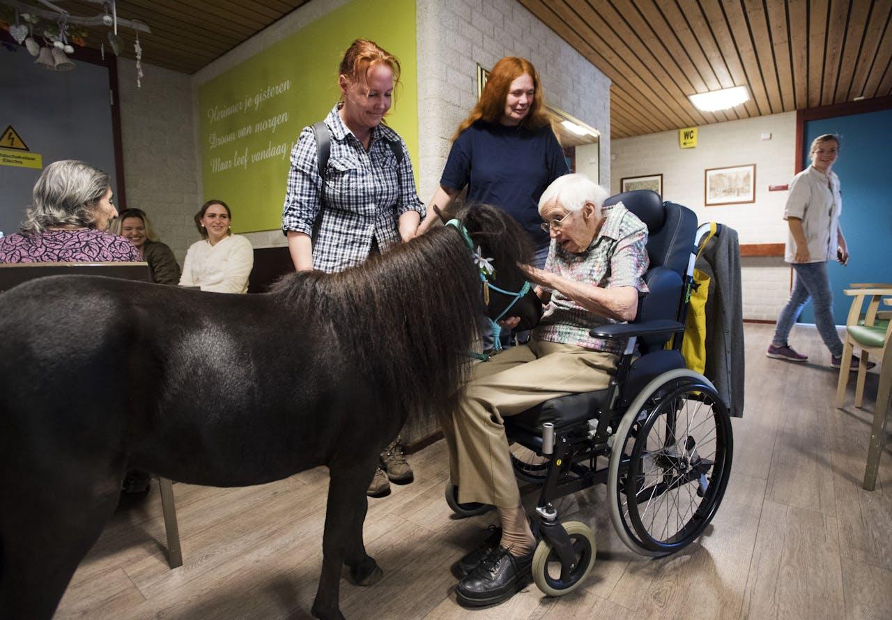 Een paardje komt aan bij een woonzorgcentrum.