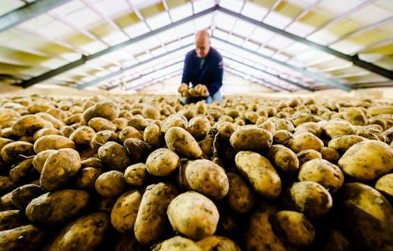 Een aardappelboer met een enorme lading aardappelen.