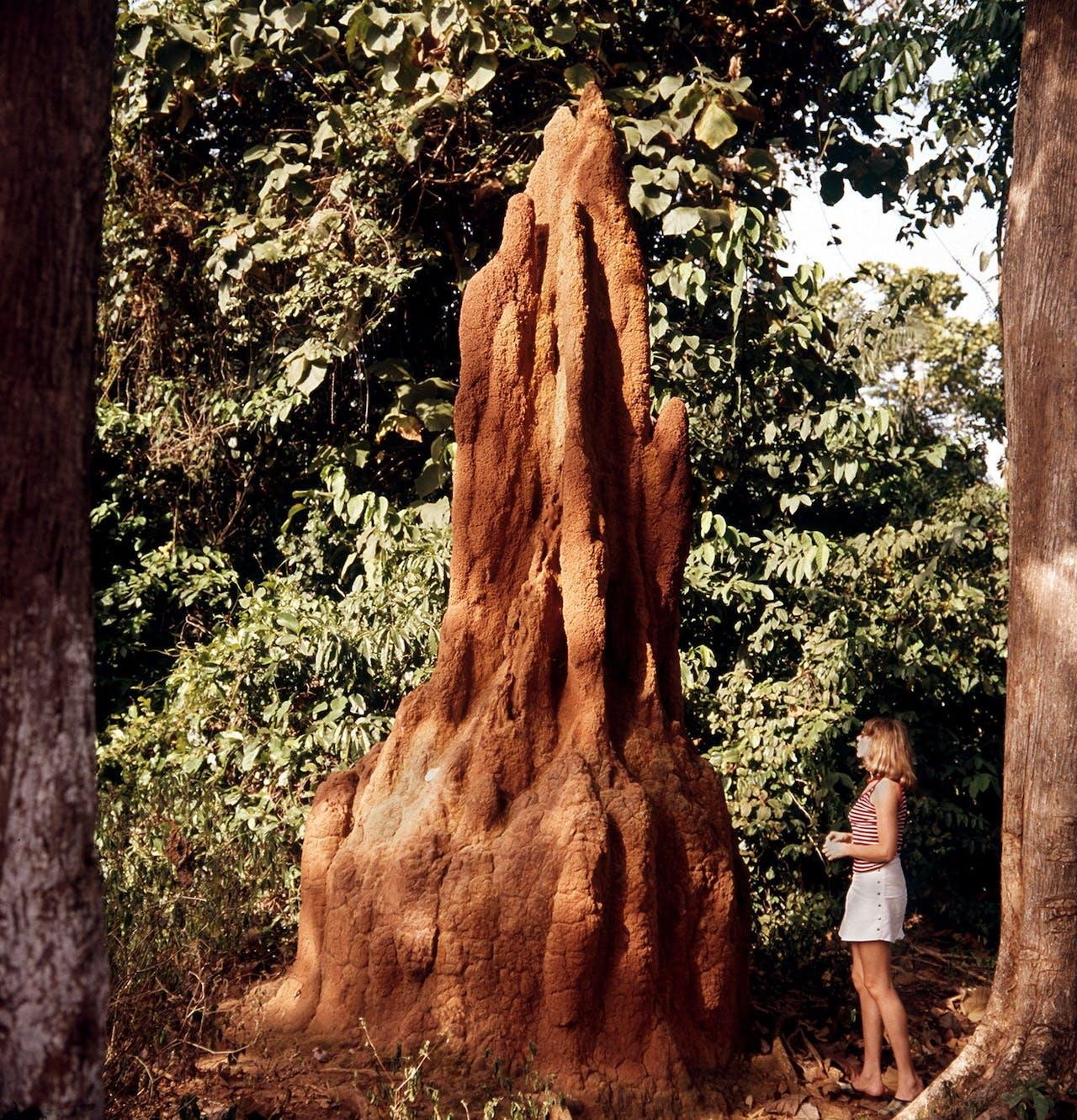 Een termietenheuvel