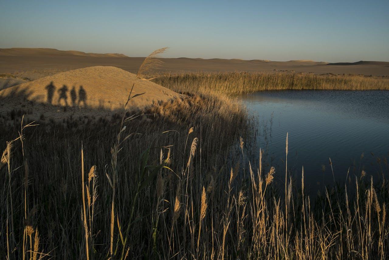 De Siwa-oase in de Egyptische woestijn