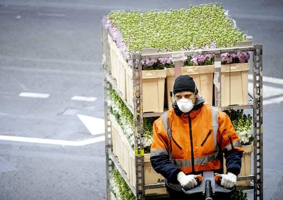 Een medewerker met een mondkapje op voert verse bloemen aan in de veilinghal van FloraHolland.