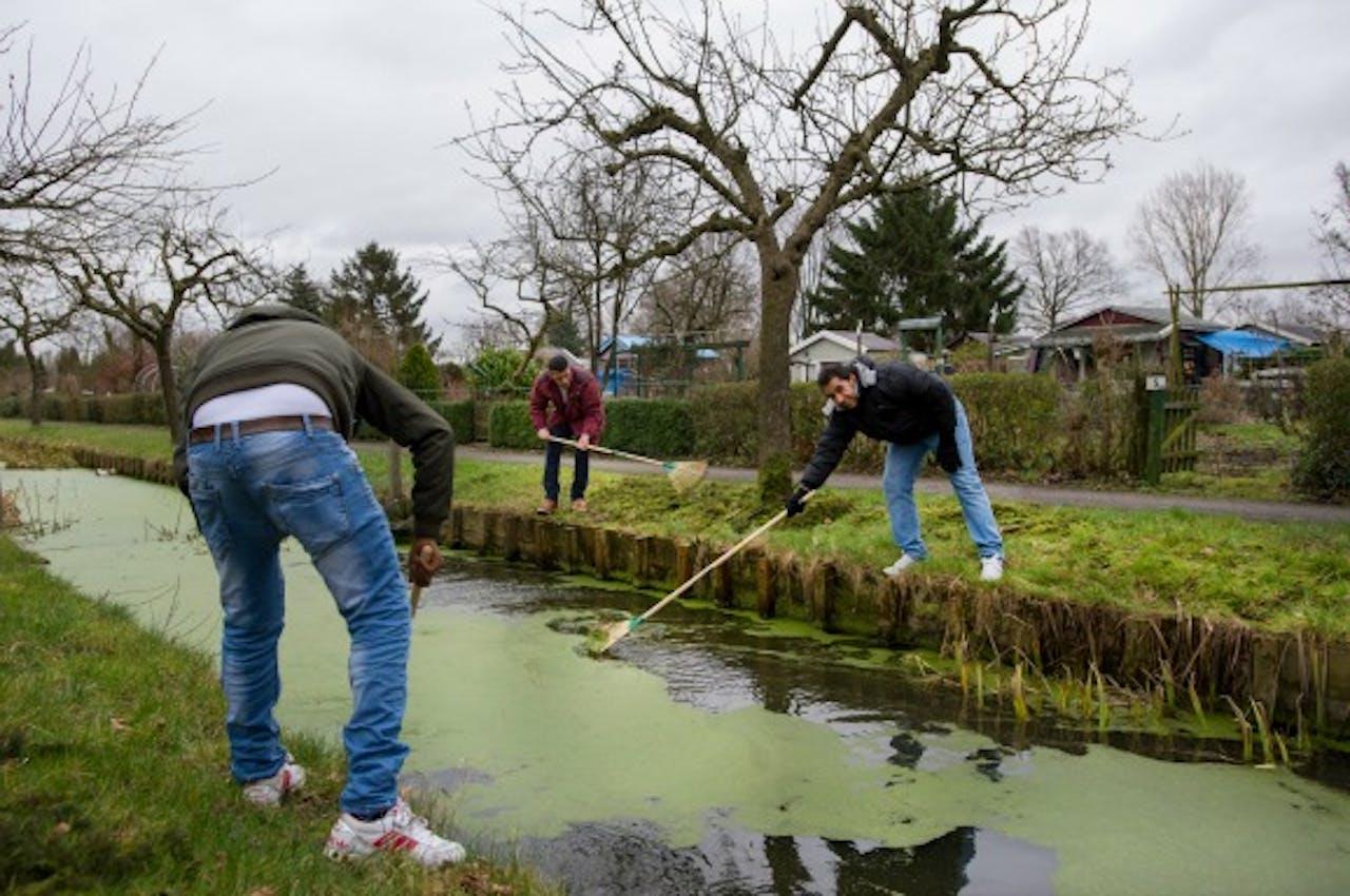 Vluchtelingen doen vrijwilligerswerk in een Utrechts volkstuinencomplex. Foto ANP