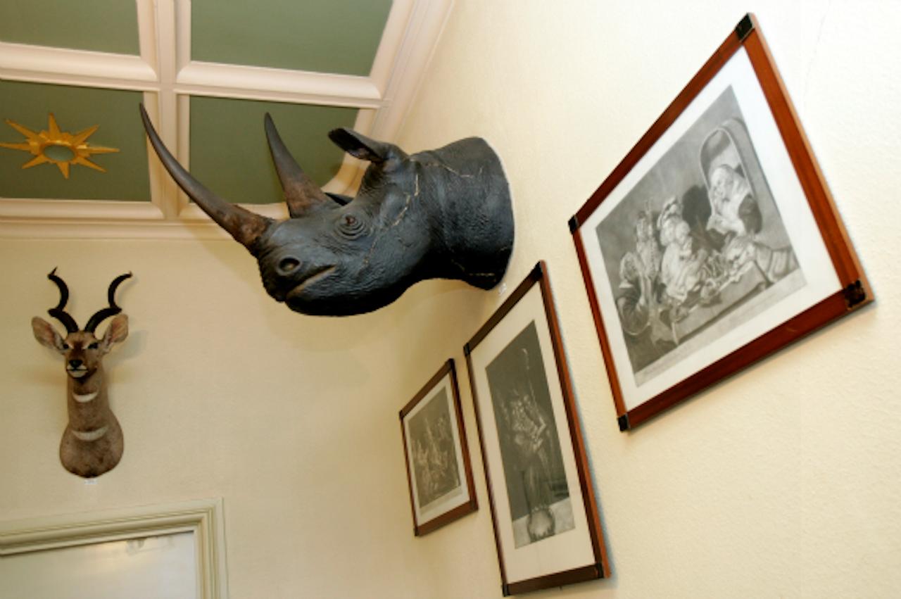 Een neushoorn aan de muur van Paleis Soestdijk. Tegenwoordig zou je zoiets niet meer mee mogen nemen. (Foto: ANP)