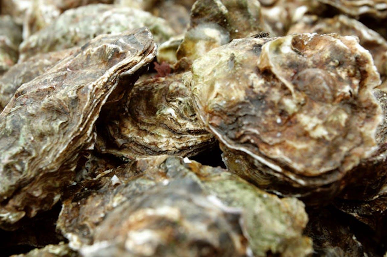 9 maart | Faillissementswet, oesters, en Miami Music Week ...