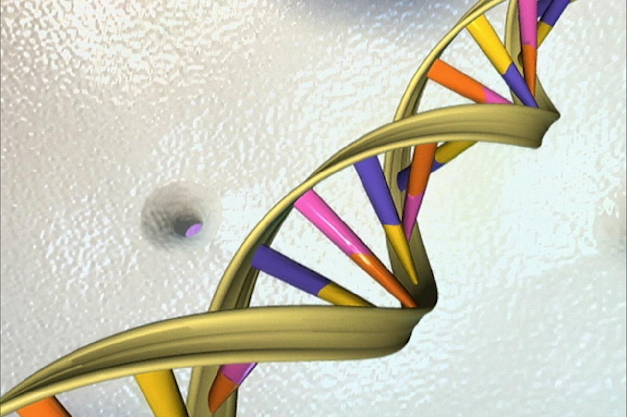 In all onze cellen zit het zelfde DNA, maar cellen gebruiken niet alle DNA-informatie. (Foto: ANP)