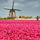 tulpen molen Nederland