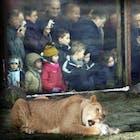 dierentuin.jpg