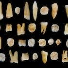 47-Human-Teeth2.jpg