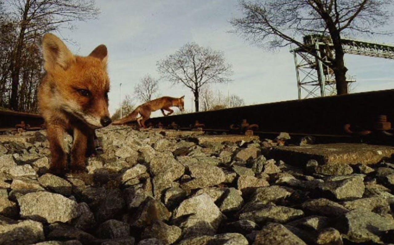 Fragment uit Amsterdam Wildlife, een film van Martin Melchers en Merel Westrik over de natuur van Amsterdam.