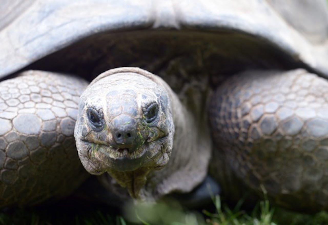 Archiefbeeld van een schildpad. EPA