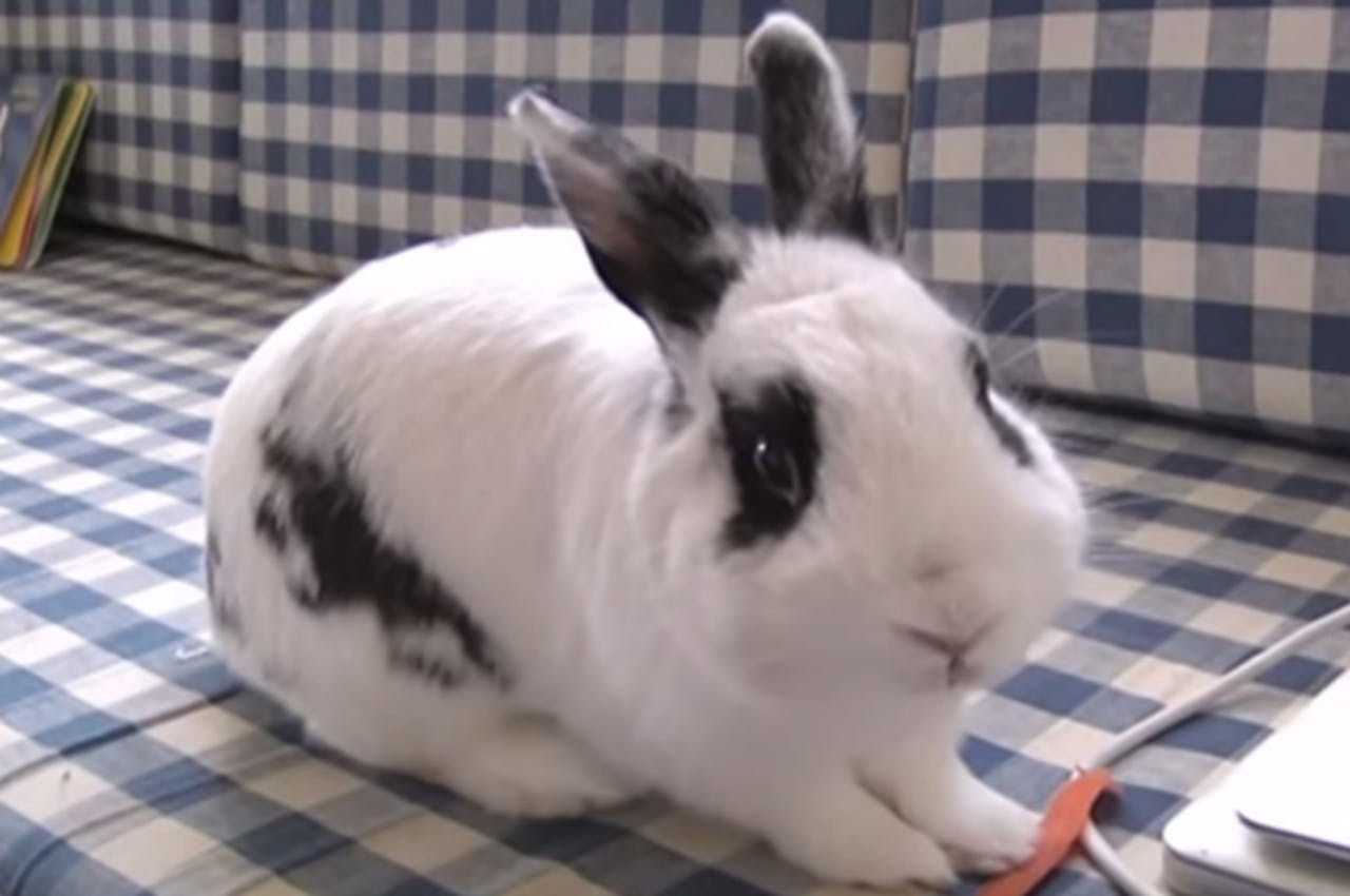 Het gratis konijn. Beeld: Youtube/Ruilen