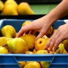 fruitteler.jpg