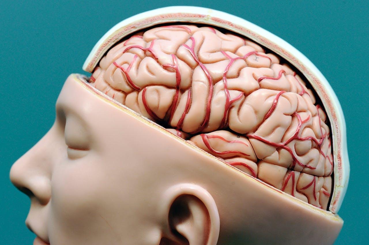 Darmen En Hersenen Twee Handen Op één Buik Bnr Nieuwsradio