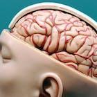 schedel.jpg