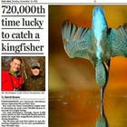 IJsvogel Daily Mail.jpg