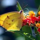 Bloemen vlinder.jpg