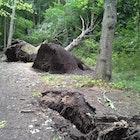 omgevallen boom in bos.png