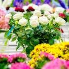 nederlandse bloemen