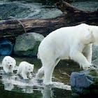 ijsberen ouwehands