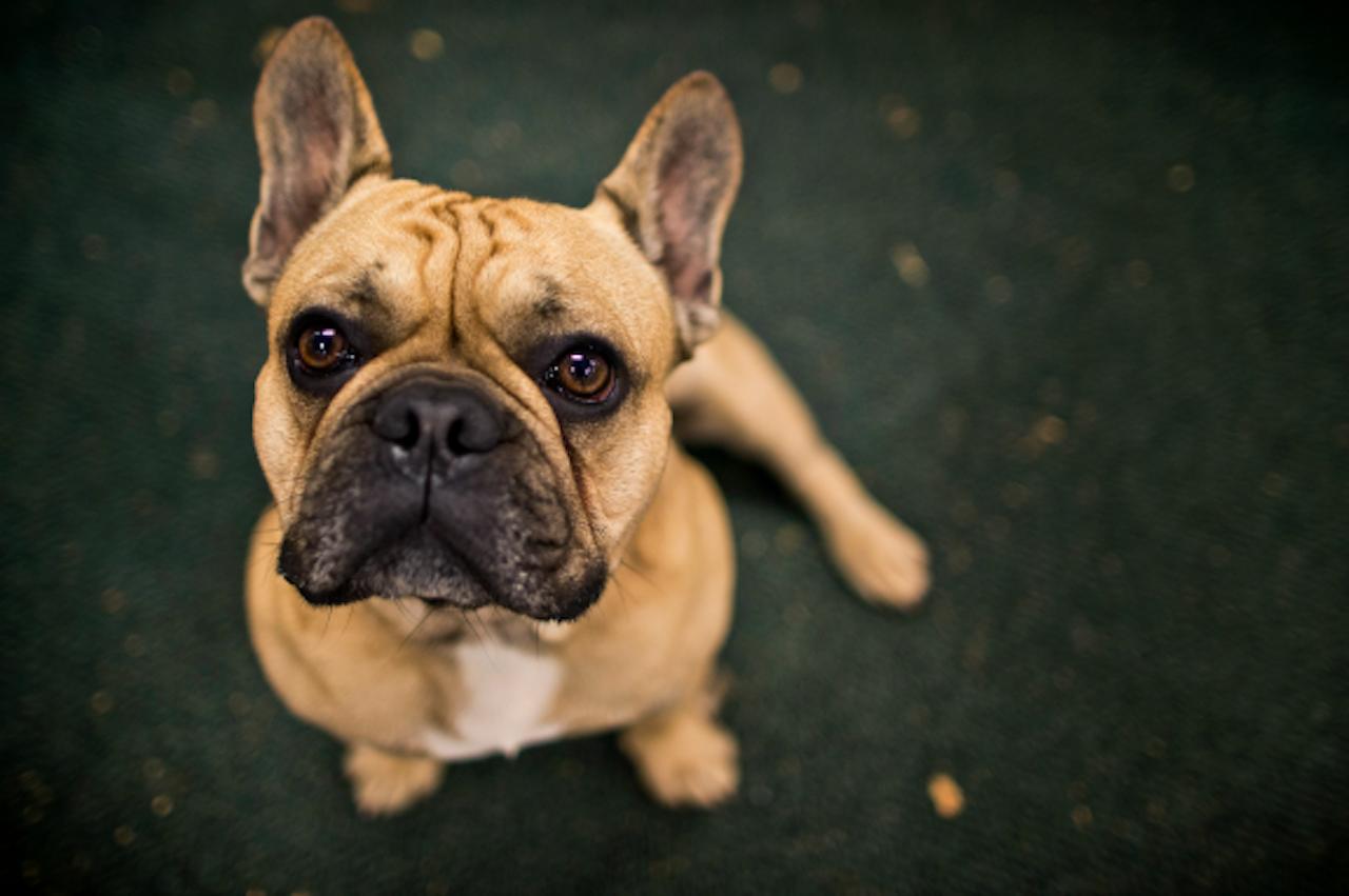Hond Pablo uit Rijswijk