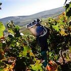 wijn-zuid-afrika.jpg