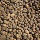 aardappelen_578.jpg