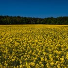 biobrandstof oil seed.jpg