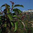 Hollywood-1-578.jpg
