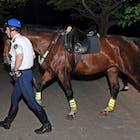vondelpark-politiepaard-578.jpg