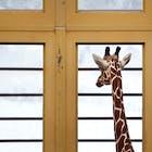 giraffe-raam.jpg