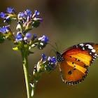 vlinder578.jpg