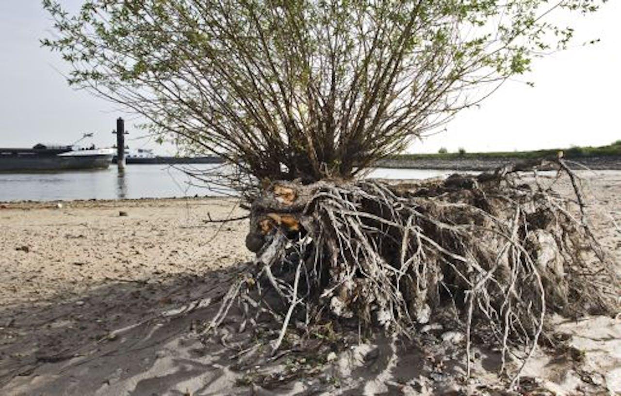 De grond bij de Waal bij Druten is vrijdag uitgedroogd. Het tekort aan neerslag in Nederland is op dit moment uitzonderlijk. ANP