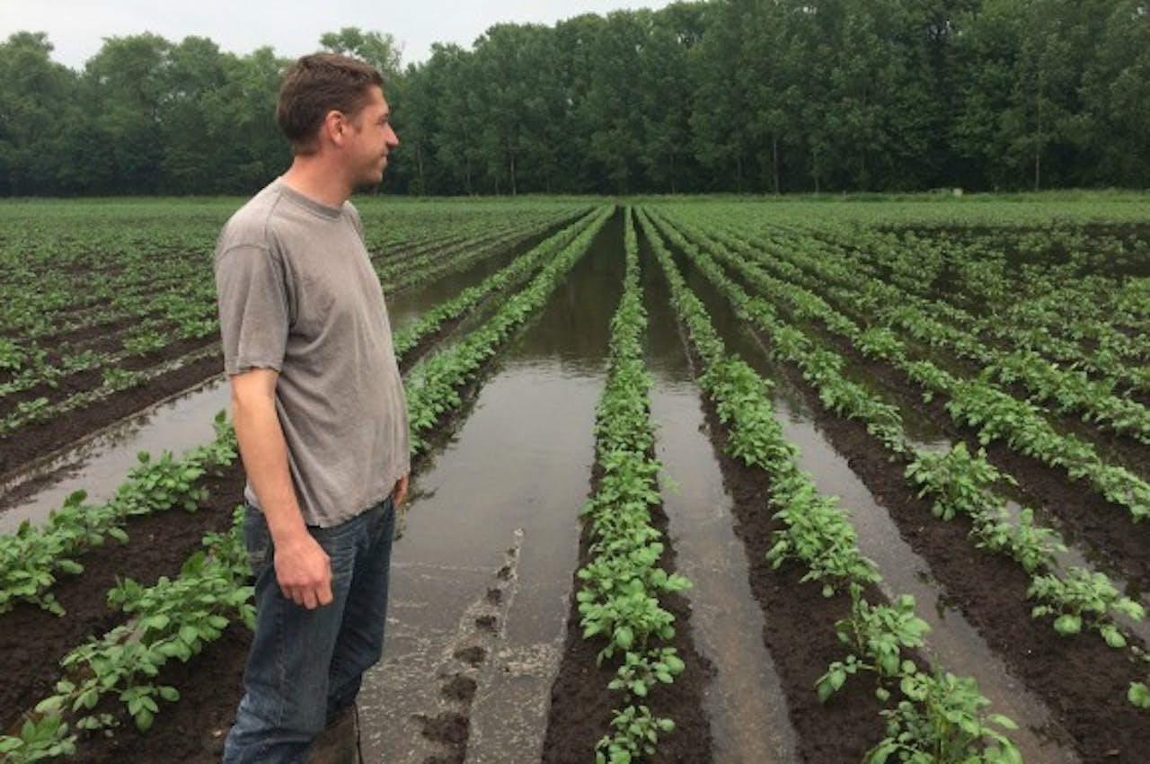 Aardappelboer Twan van der Heijden tussen zijn aardappels. Foto Rogier van Dankerlui / BNR