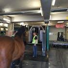 Paard KLM.jpg