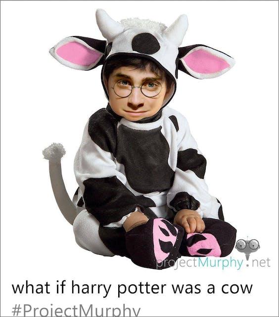 Wat als...Harry Potter een koe was?