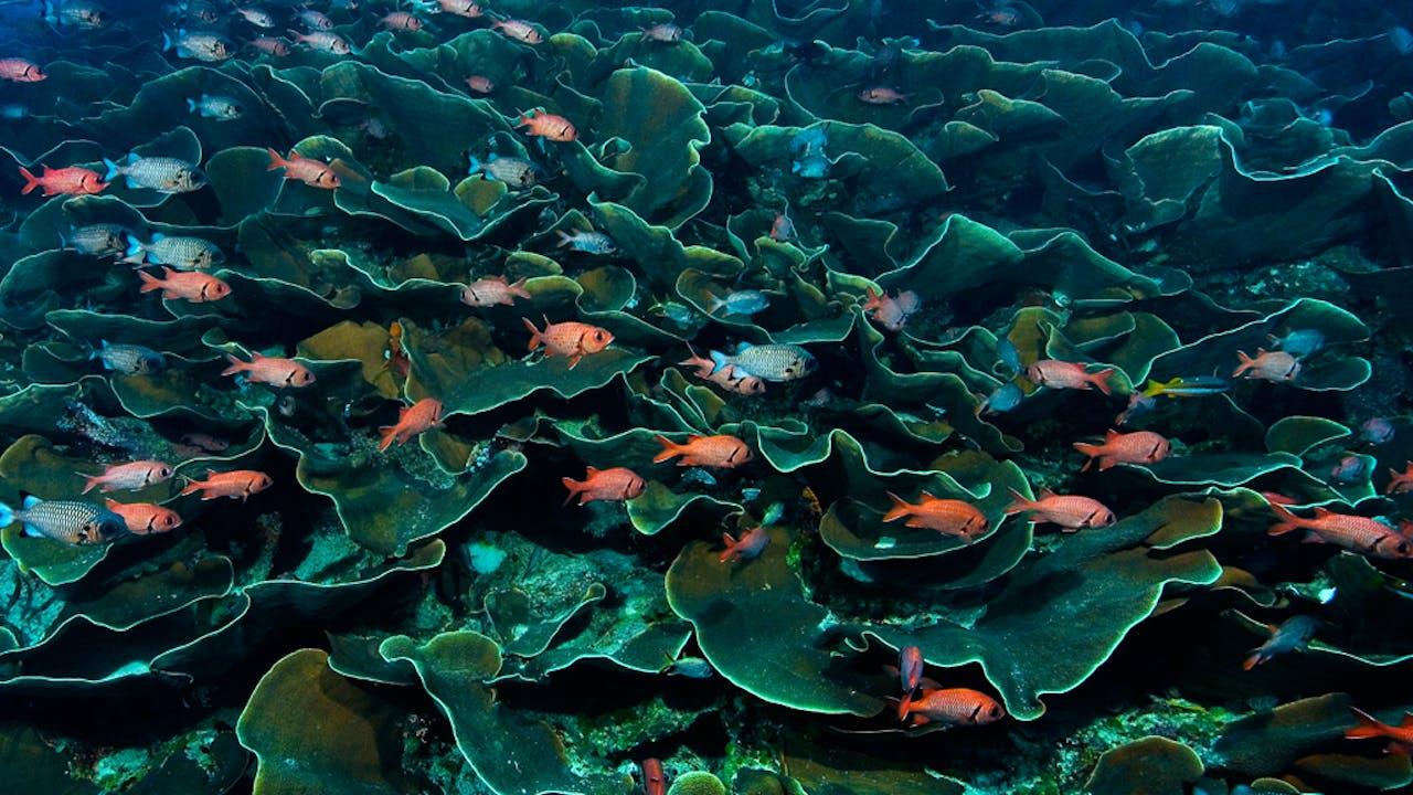 Vissen voorzien koraal van belangrijke groeistoffen zoals fosor.