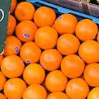 Sinaasappelen.jpg