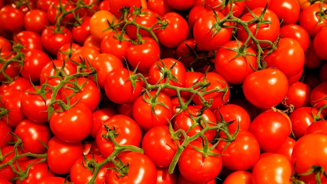 Voila, een tomaat. Foto ANP