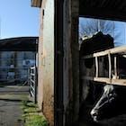 Koeien boeren fosfaat.jpg