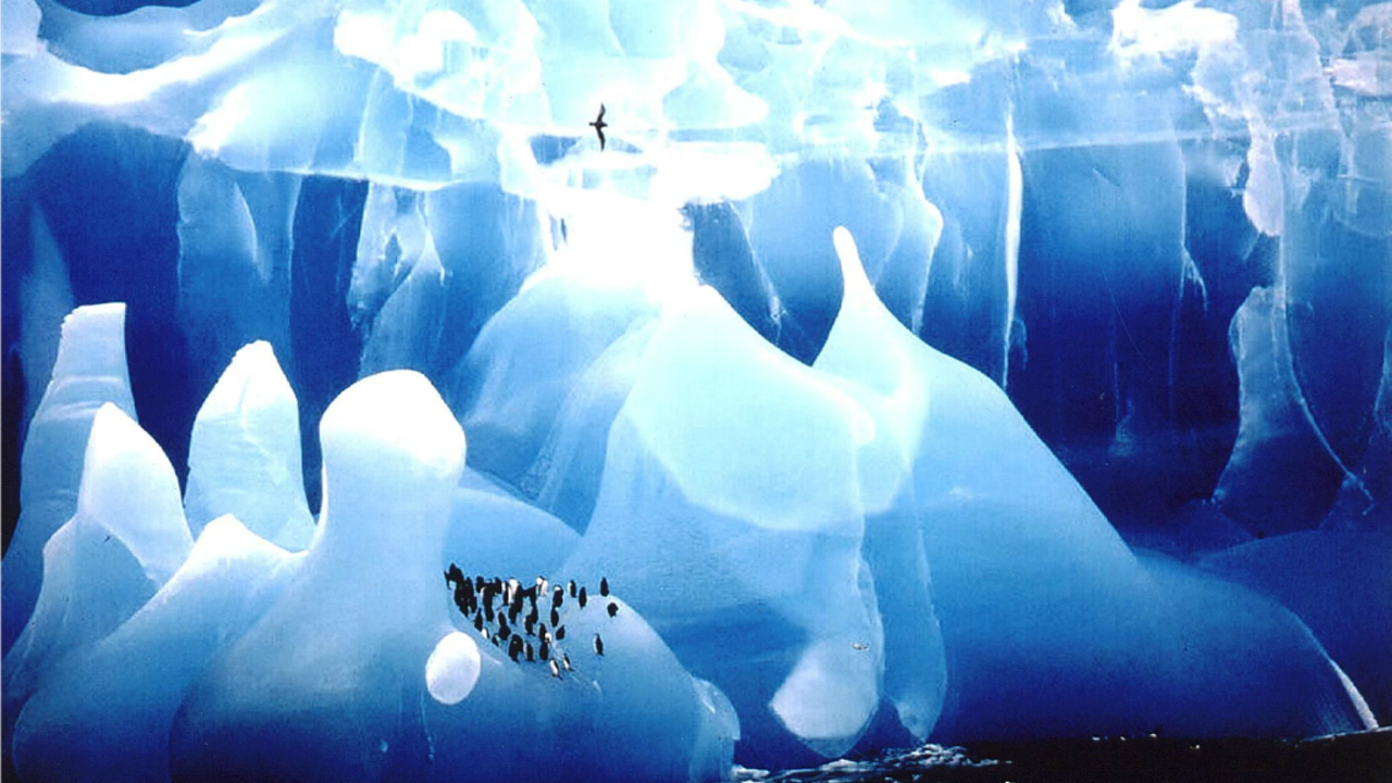 Blauwe IJsberg, Antarctica, winnaar van de Wildlife Photgrapher of the Year 1995 (Foto: Cherry Alexander, via ANP)