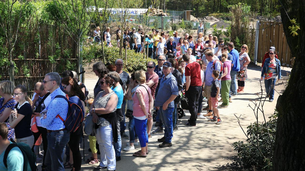 Lange rijen van mensen die een pasgeboren olifantje willen zien, afgelopen zomer in de Beekse Bergen. Het was zo druk dat automobilisten werd verzocht om ergens anders heen te gaan. (Foto: Hollandse Hoogte)