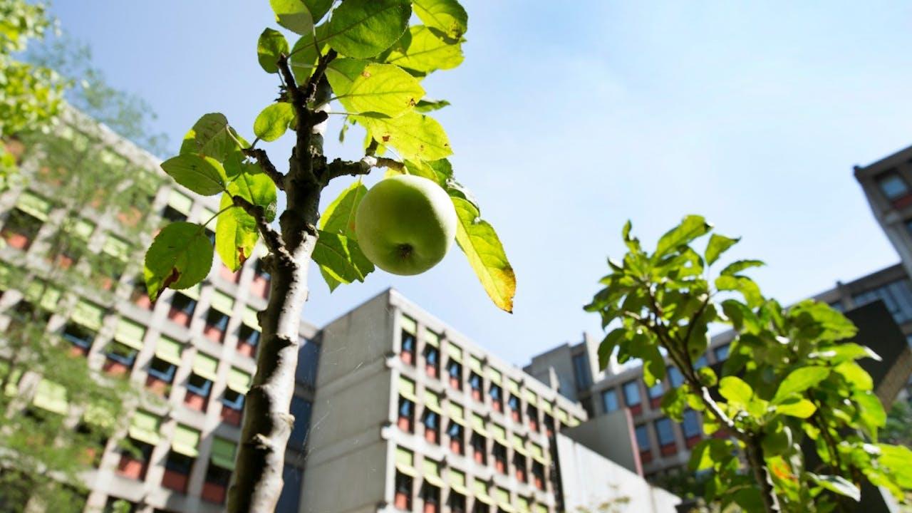 Heerlen 20-08-2015. Stad Landbouw gepromoot door bedrijf World of Walas, in en rond het voormalige CBS-gebouw. Foto: HH/Ton Toemen