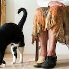 ouderen-zorg-kat.jpg