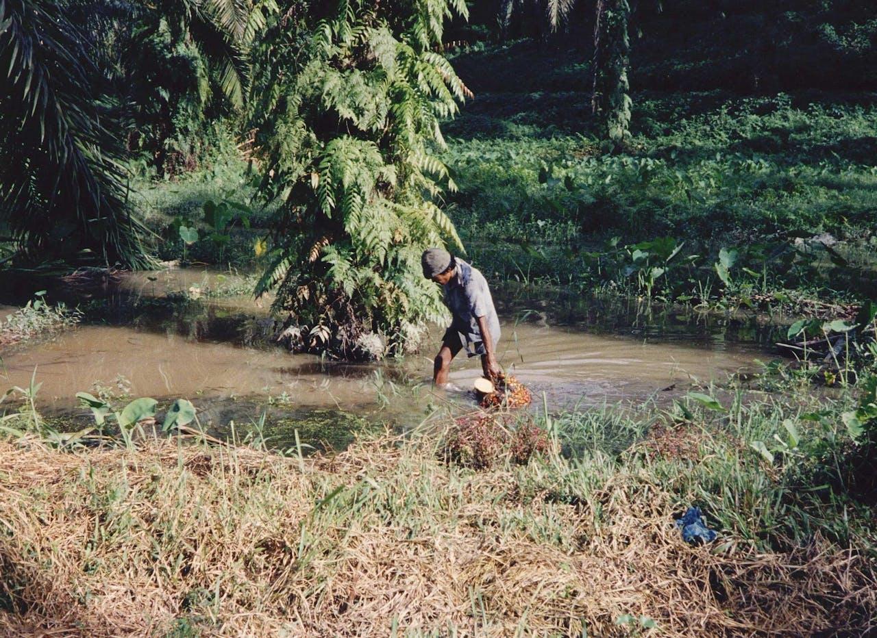 De winning van palmolie in Jakarta. Foto ANP