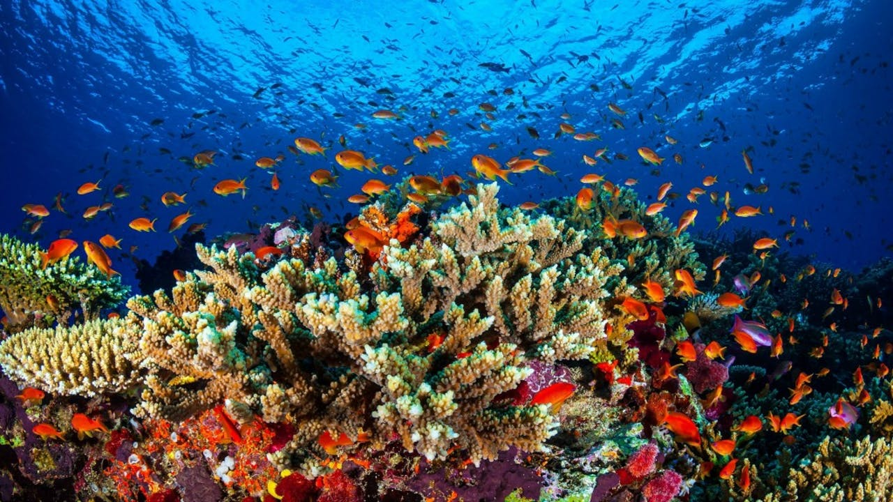 Foto: ANP - Great Barrier Reef