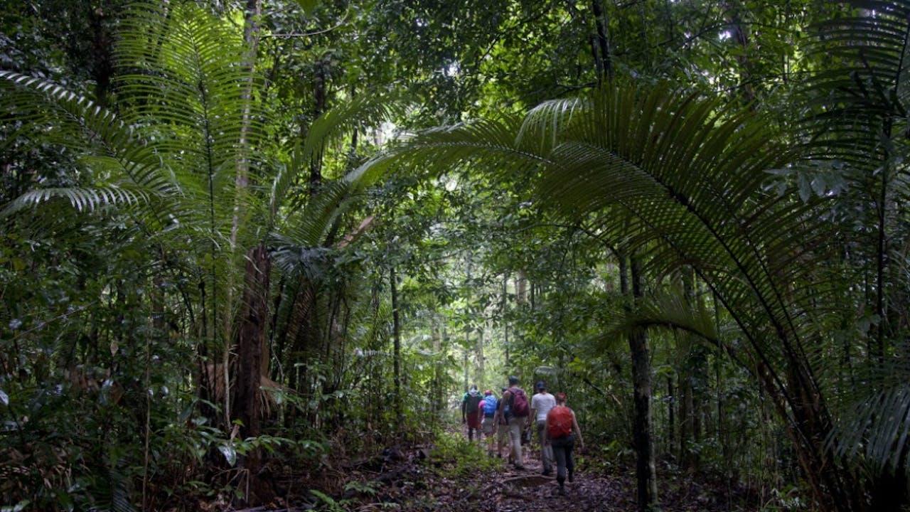 Brownsberg Natuurpark, Suriname. Foto: Henk Braam/Hollandse Hoogte