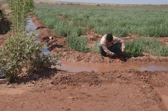 Boerderij in Afrika.